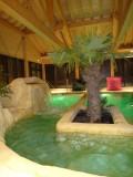 piscine-palmier-568